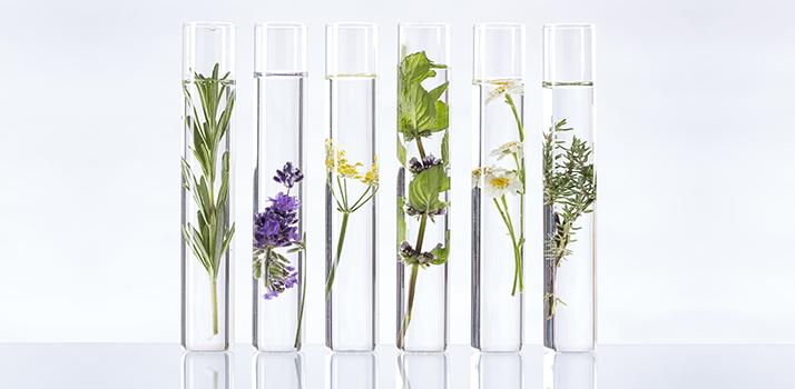 Anti-age biljke