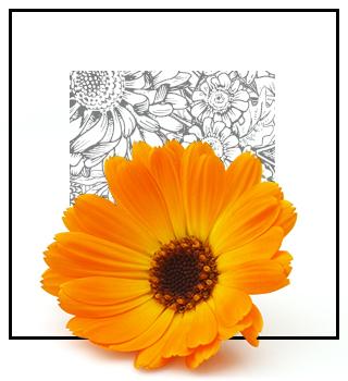 Niche parfemi - cvjetni